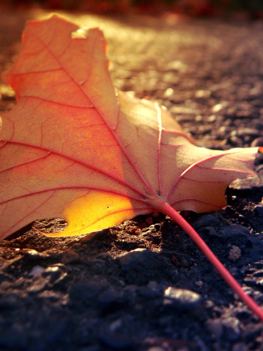 Photograph fallen leaf on the ground by Angelika Bürger on 500px