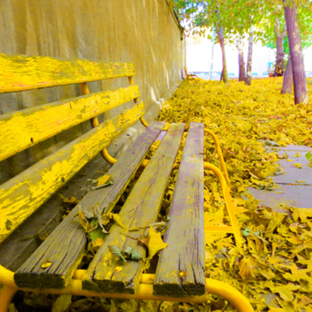 Yellow Autumn, Canon IXUS 240 HS