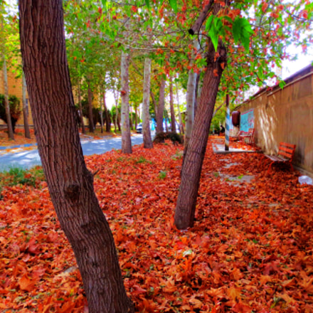 Autumn is the best, Canon IXUS 240 HS