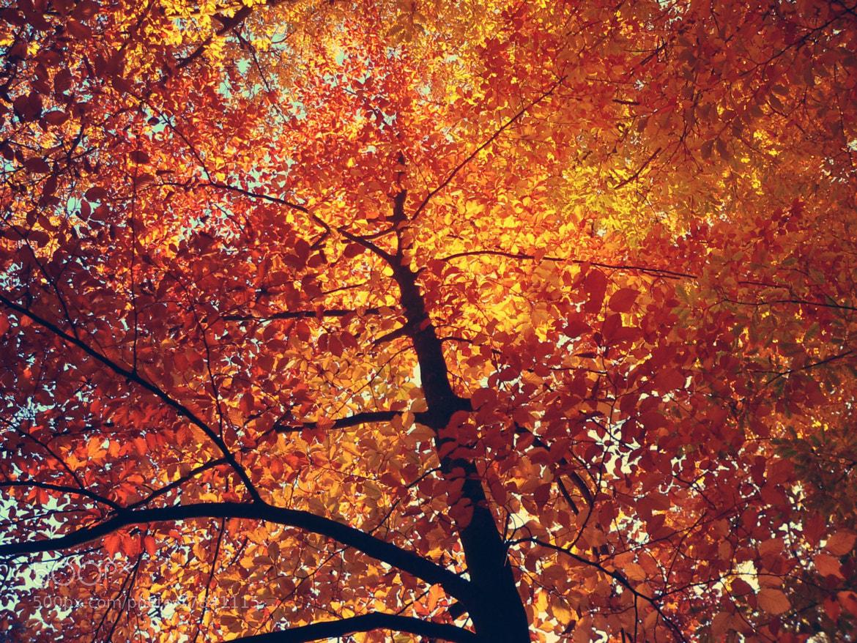 Photograph autumn by Angelika Bürger on 500px