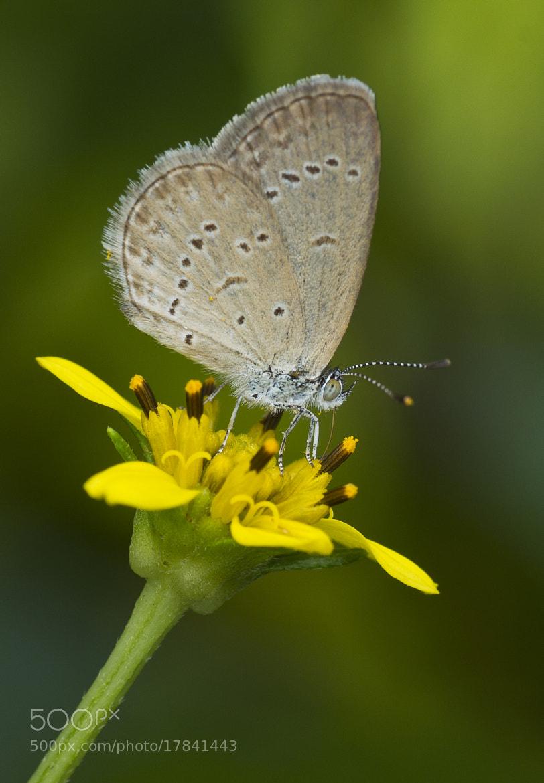 Photograph Honey... by Esazyla Esa on 500px