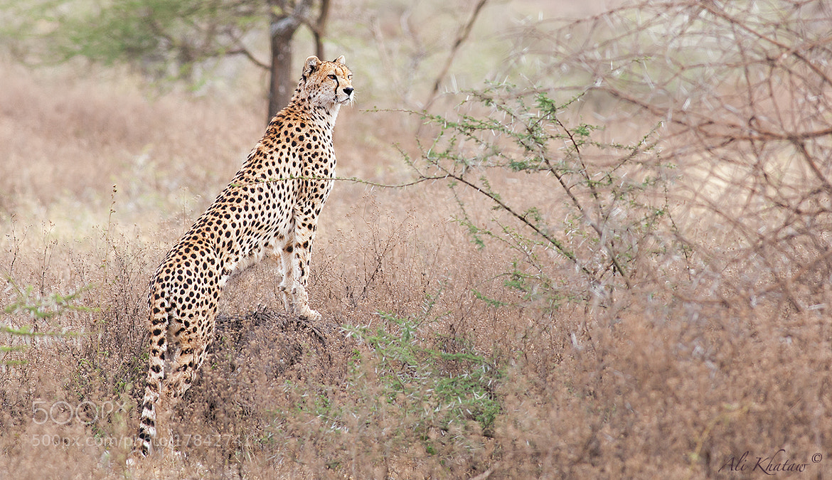 Photograph Beginning the Hunt! by Ali Khataw on 500px
