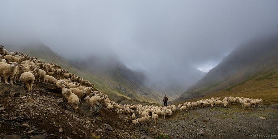 Sheeps mountains
