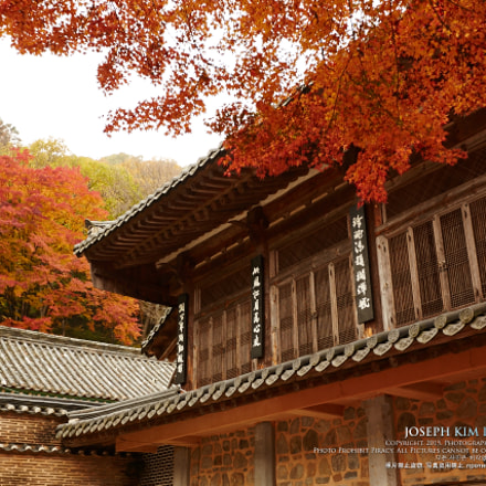 Red Leaves with the, Canon EOS 5D MARK III, Canon EF 16-35mm f/2.8L II USM