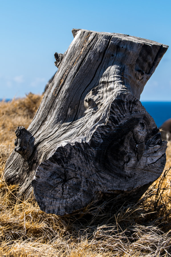 Stump by Victor Mussard on 500px.com