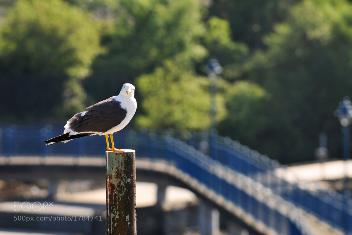 Photograph The Gull by Tommy McDermott on 500px