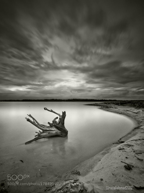 Photograph driftwood series by Razali Ahmad on 500px