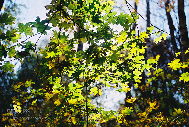Photograph autumn leaves by Gleb Myalik on 500px