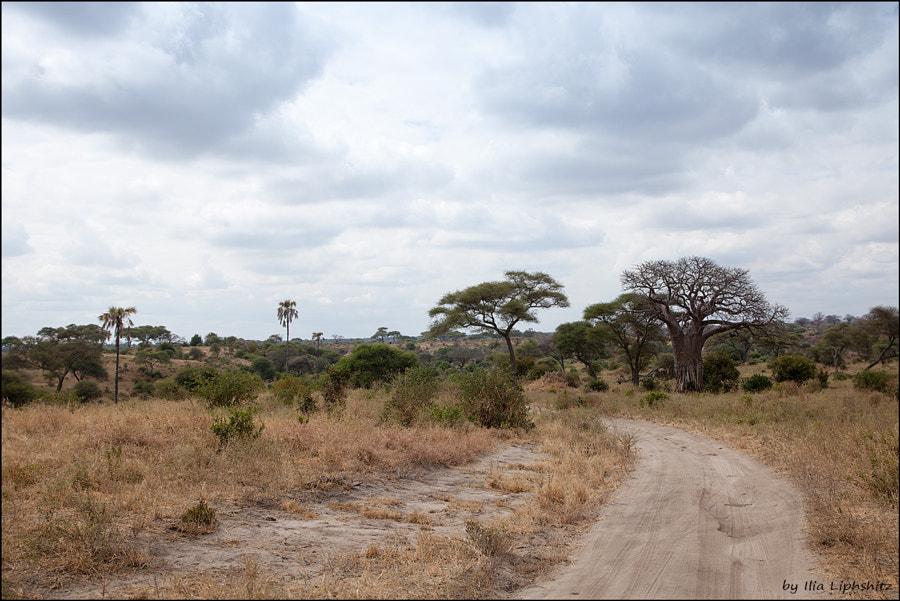 Landscapes of Tarangire №3