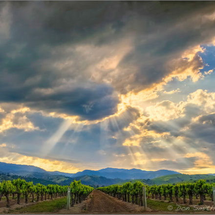 Crepuscular Rays Over Vineyard, Canon EOS-1DS MARK II, Canon EF 20-35mm f/2.8L