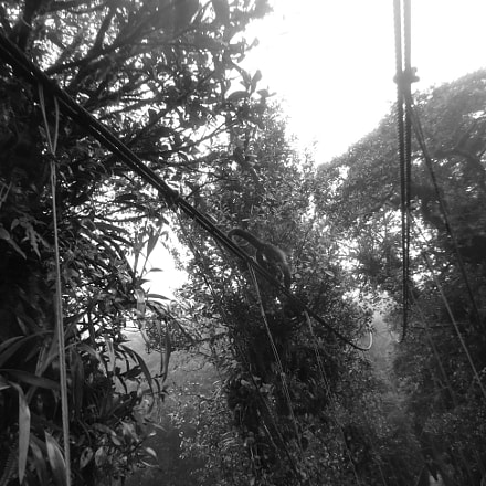 RainForest, Sony DSC-W330