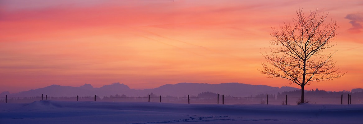 Photograph lonely tree panorama by Johannes Ha on 500px
