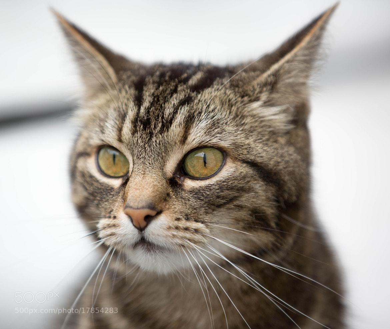 Photograph Feline portrait by Lars Barstad on 500px