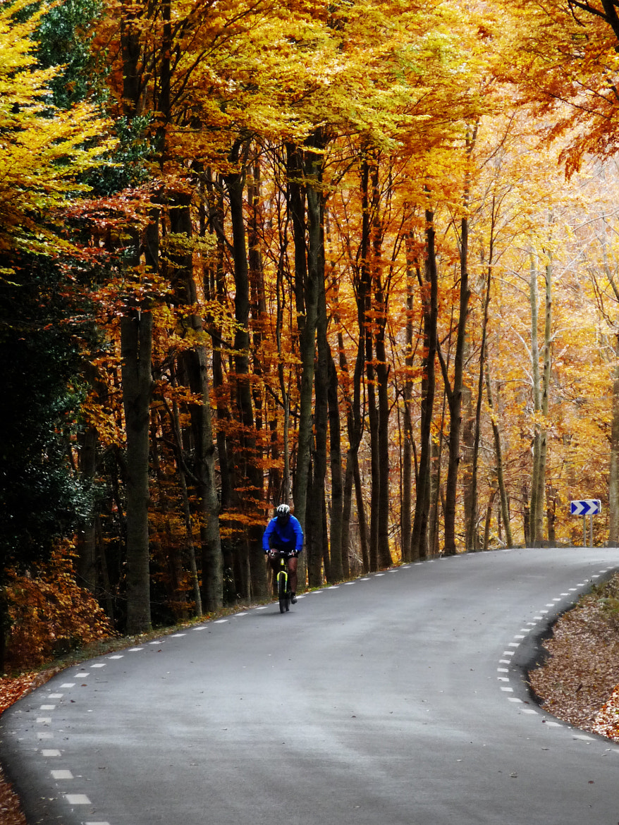 Photograph Cicling in Montseny, Fall 2012 by Xavi Perramon on 500px