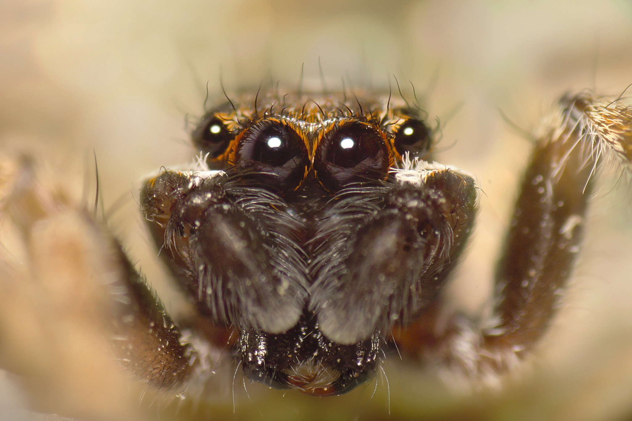 Photograph cute jumper by Can Dogan on 500px