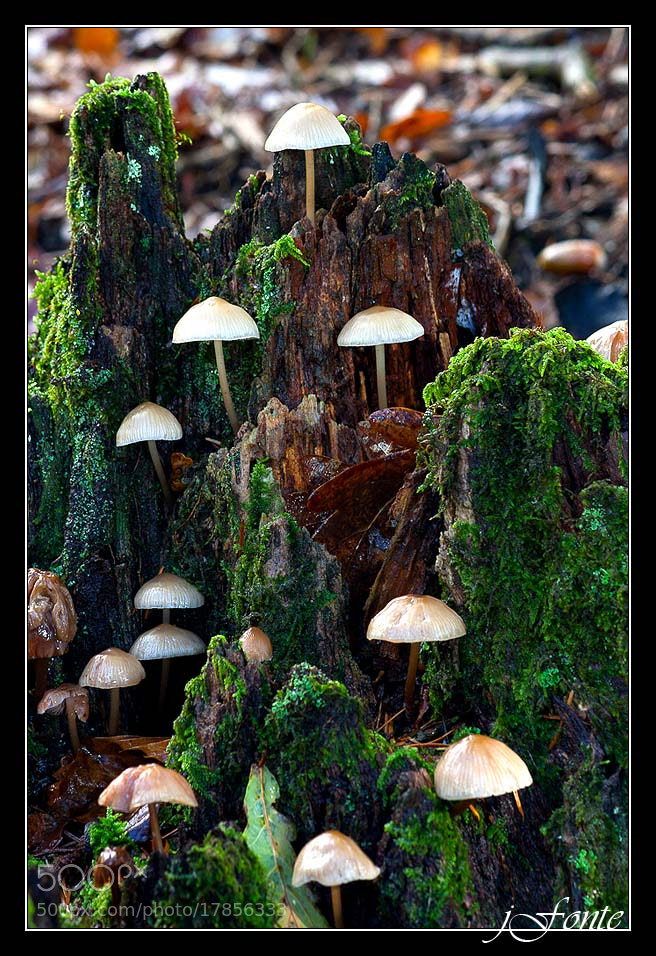 Photograph mushroomlandia by Jose Fonterosa on 500px