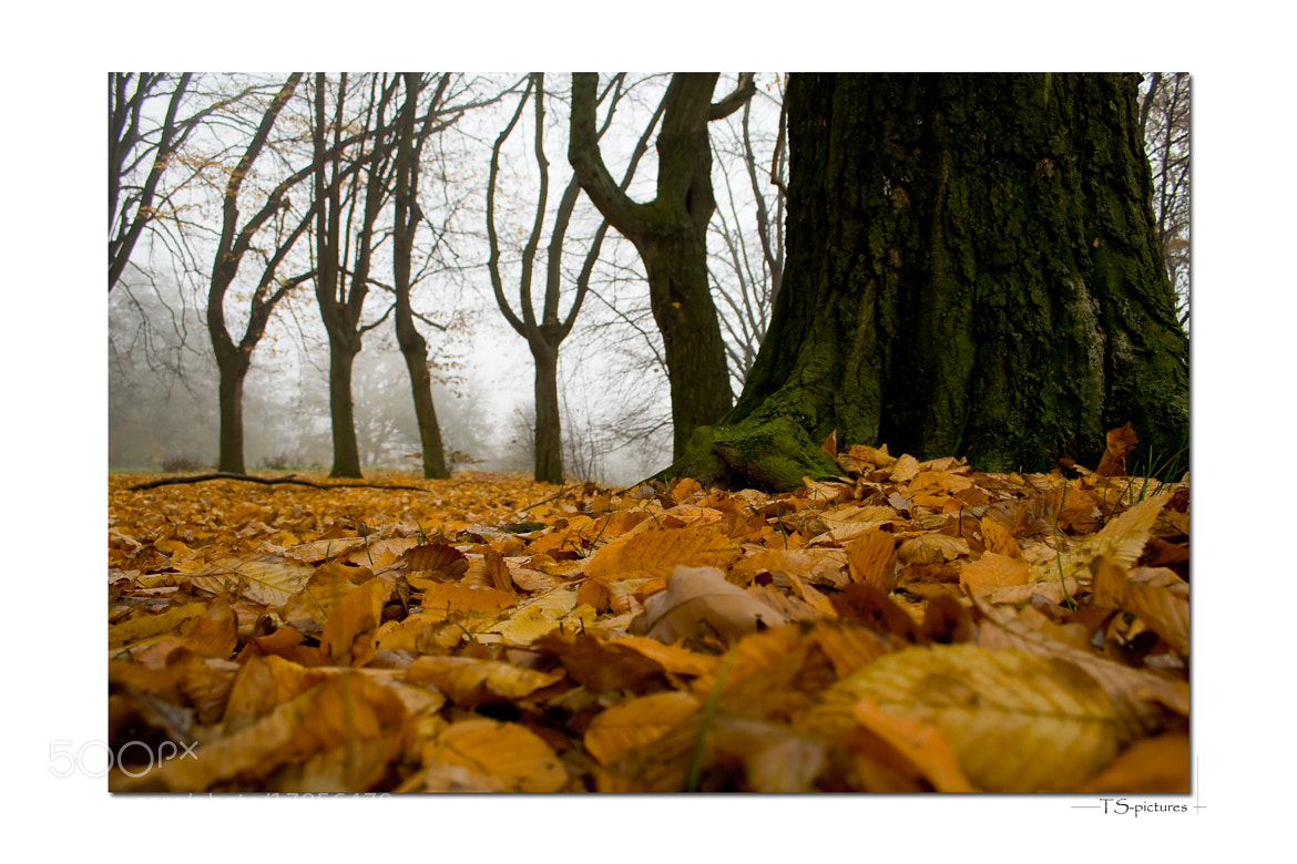 Photograph November by Tanja  Schiese on 500px