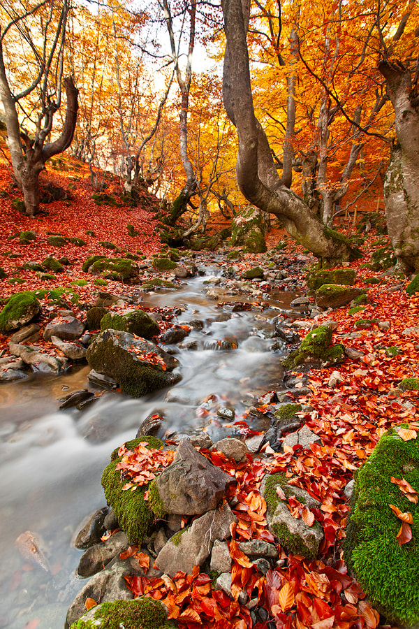 Photograph REd, green, yellow forest by Lujó Semeyes on 500px