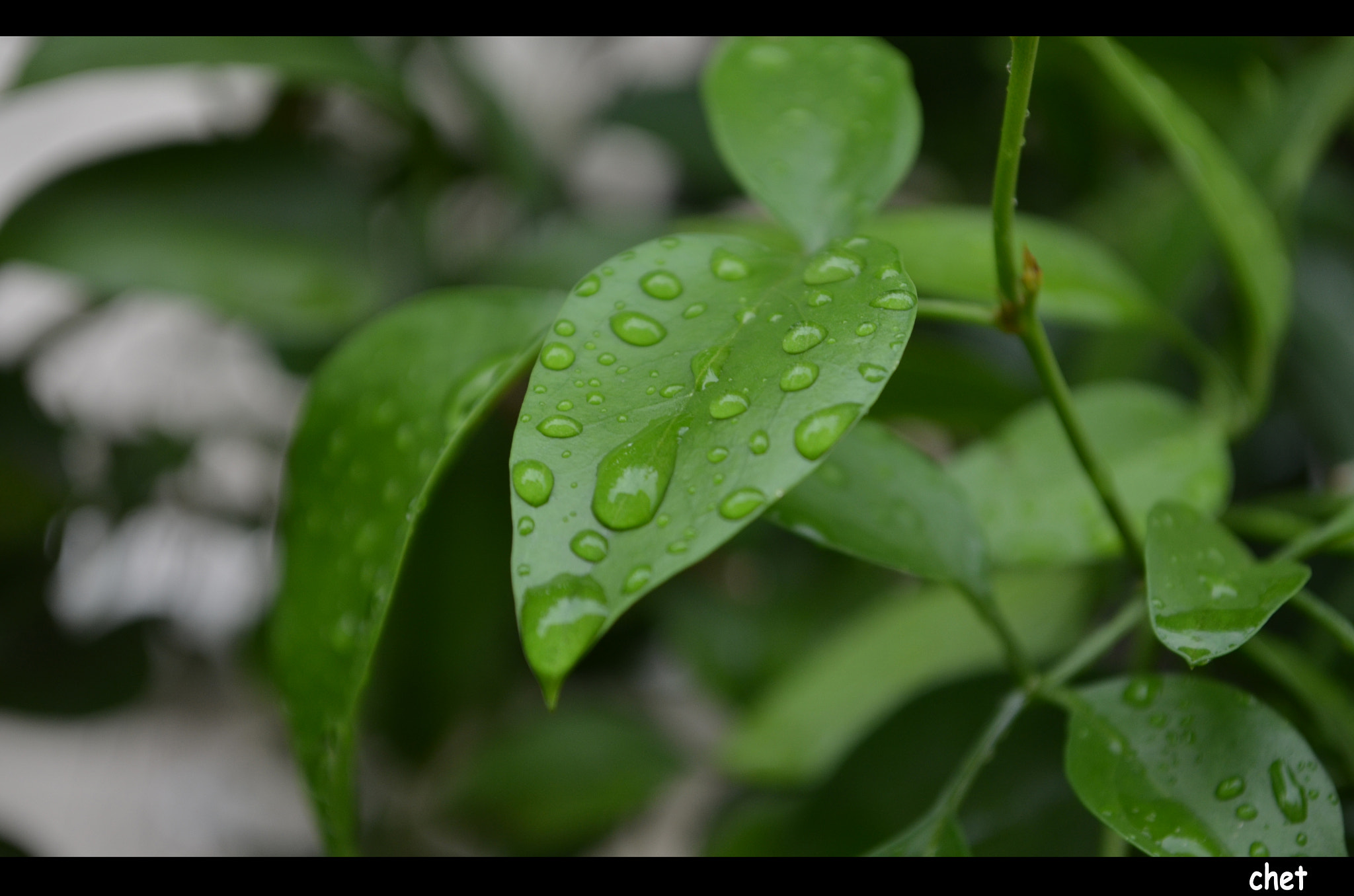 Photograph Droplets of Rain by Sathish Arulmani on 500px