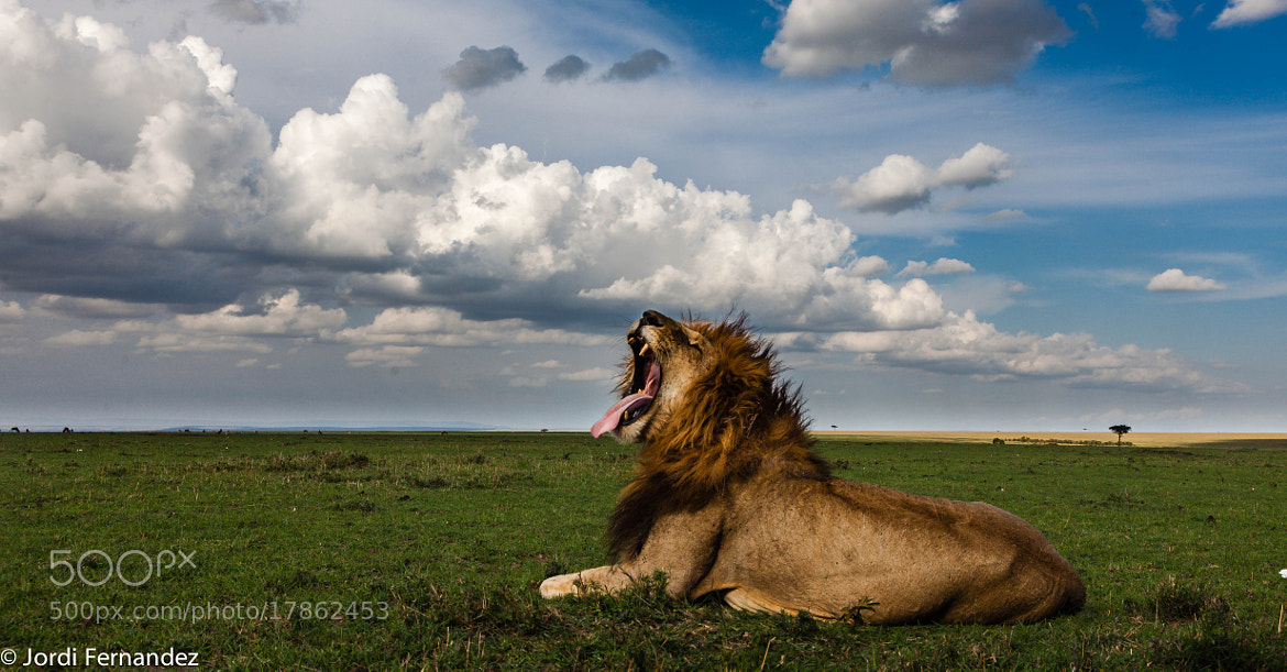 Photograph The King is resting by Jordi Fernandez Balague on 500px