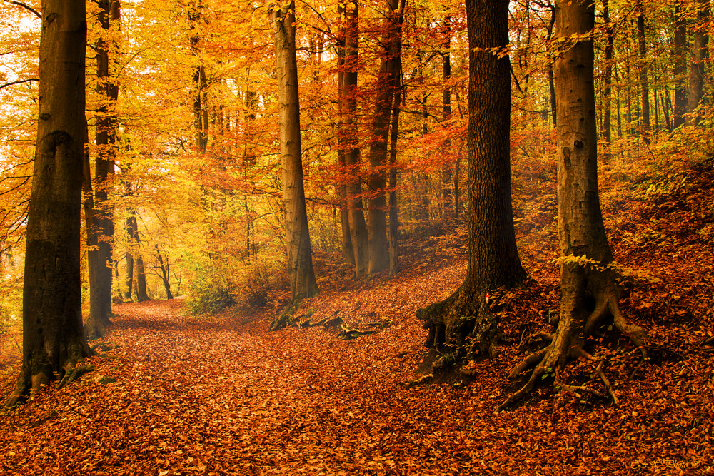 Photograph Colors of the forest by Zdravko  Horvat on 500px