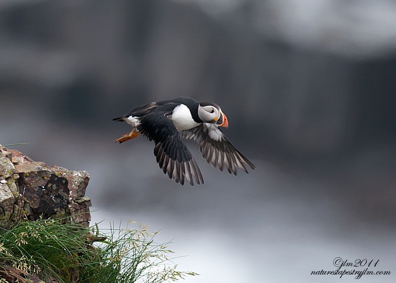 The Puffin was leaving the cliffs to head out to the open sea.