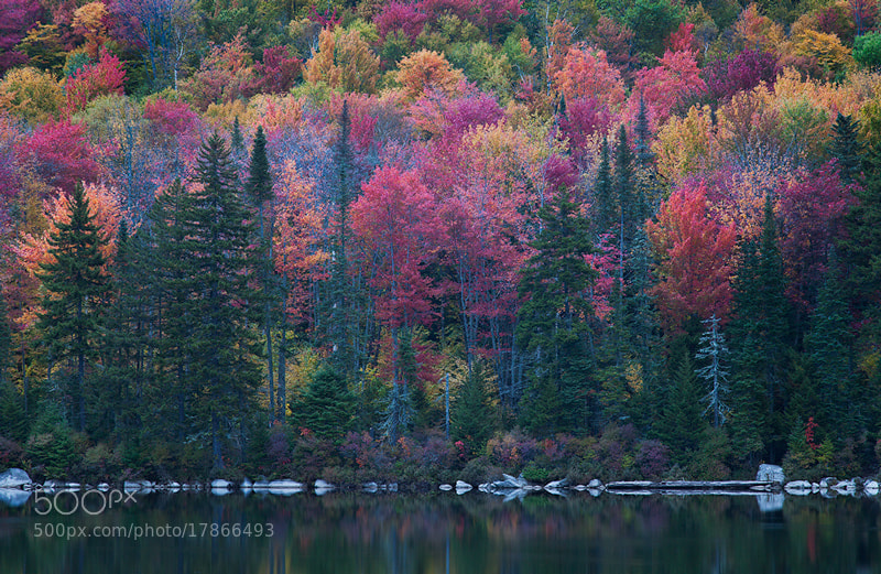 Photograph Fall in Vemont  by Sarah Marino on 500px