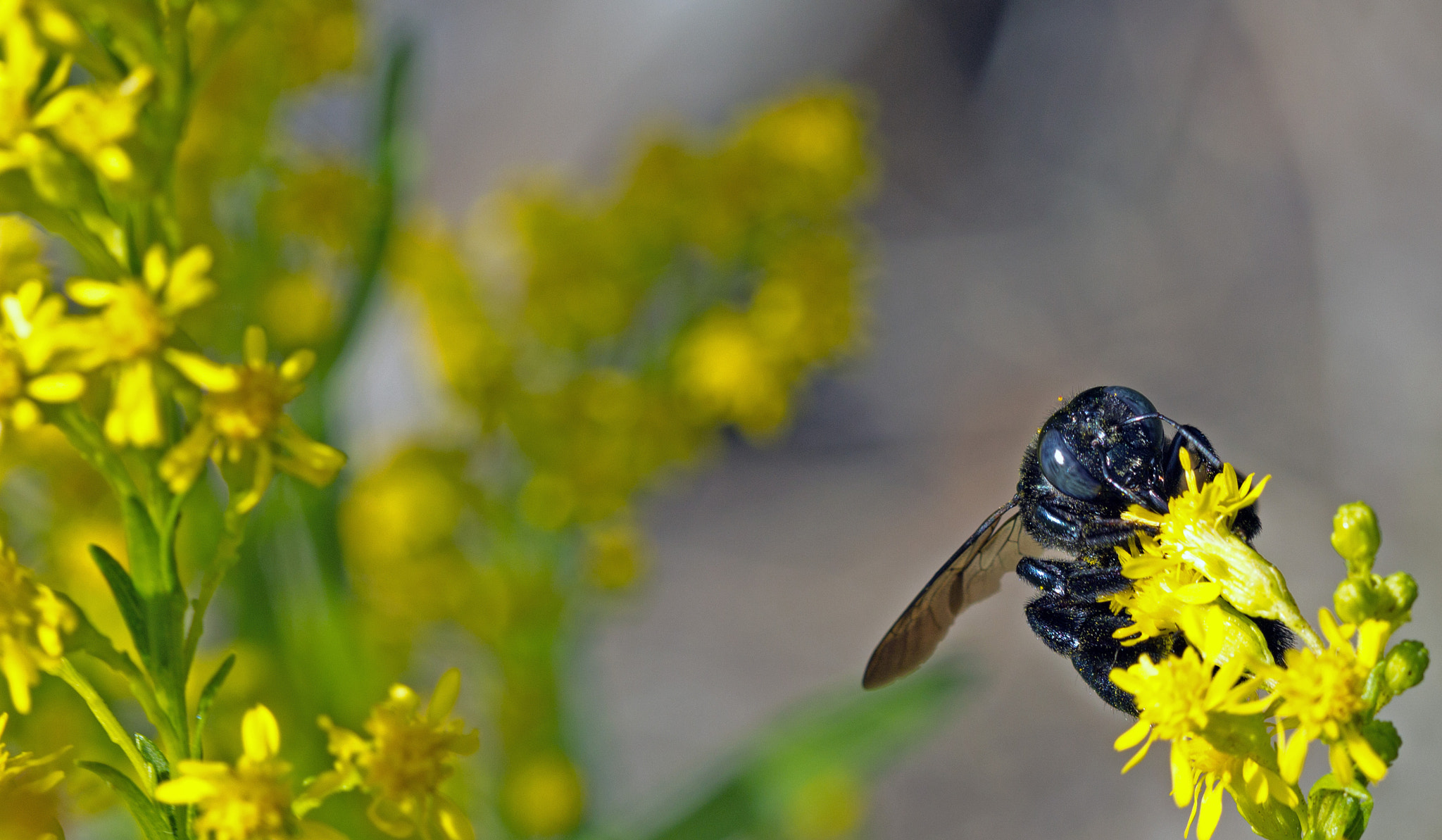 Photograph Bee Still by Kirsten Cunningham on 500px