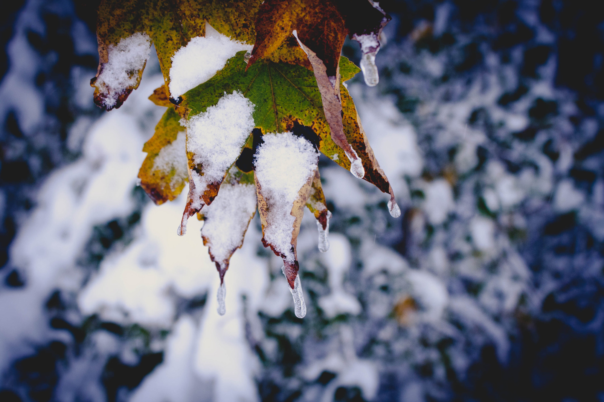 Photograph snow. autumn I by Sven Aeschlimann on 500px