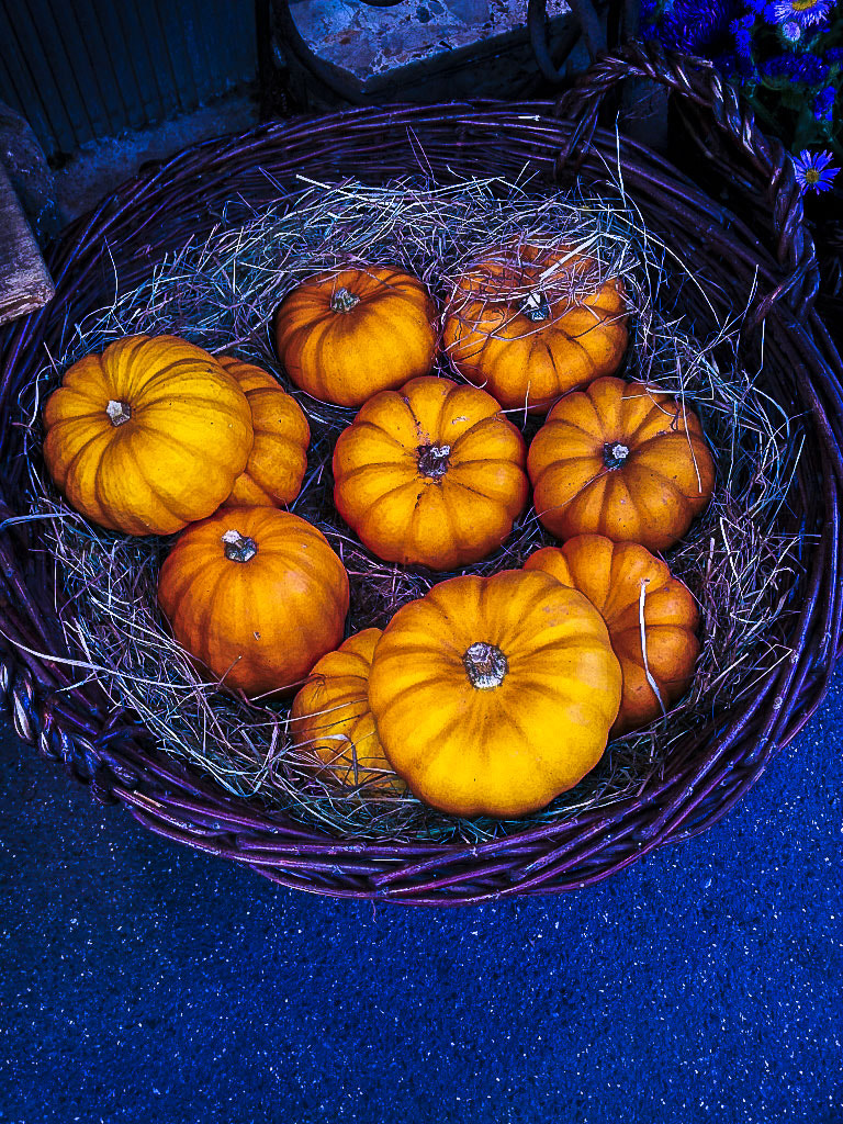 Photograph Happy Halloween by Michaela Sibi on 500px