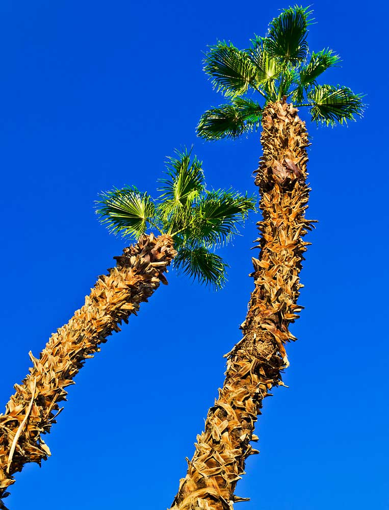 Photograph Las Vegas Palm Trees by Steve Sutherland on 500px