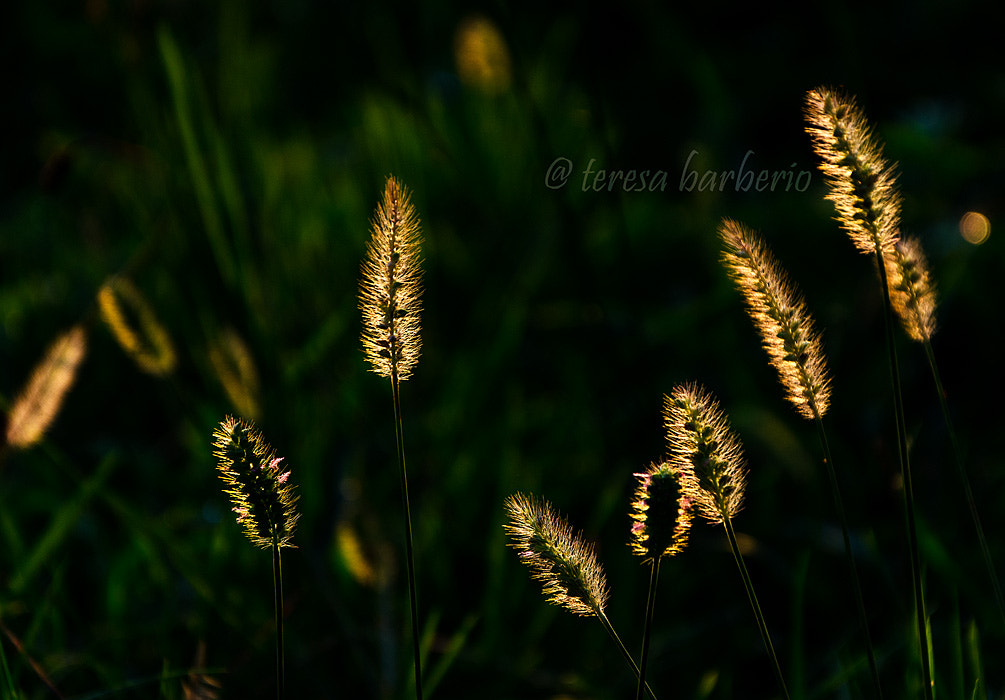 Photograph Green fireflies by Teresa Barberio on 500px