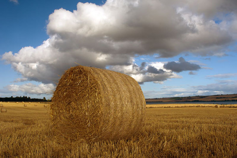 Photograph Harvest, Kiltearn, Evanton, Ross-shire, Scottish Highlands by Heather Leslie Ross on 500px