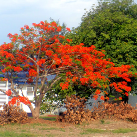 Flaming Tree, Sony DSC-TF1