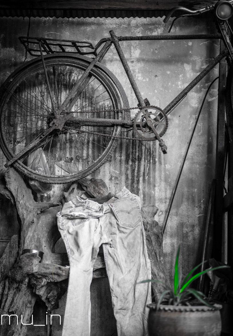 Photograph Bike Jeans Tree by muin semchuchot on 500px