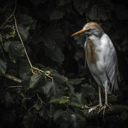 bird watching you ca branch