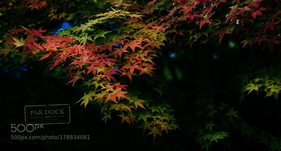 Autumn leaves - Takayama
