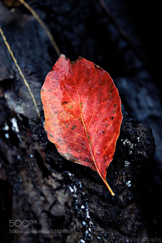 Photograph Ash After Crimson by Caitlin Mendez on 500px