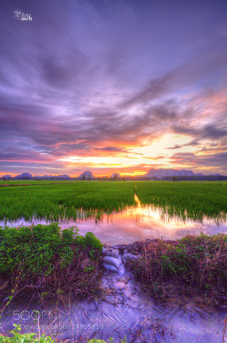 Photograph Paddy Fields  by Anuar Che Hussin on 500px