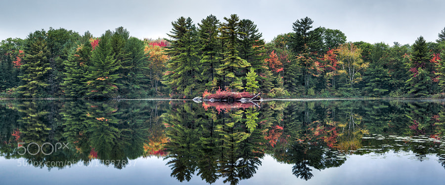 Lake reflection in cottage country.