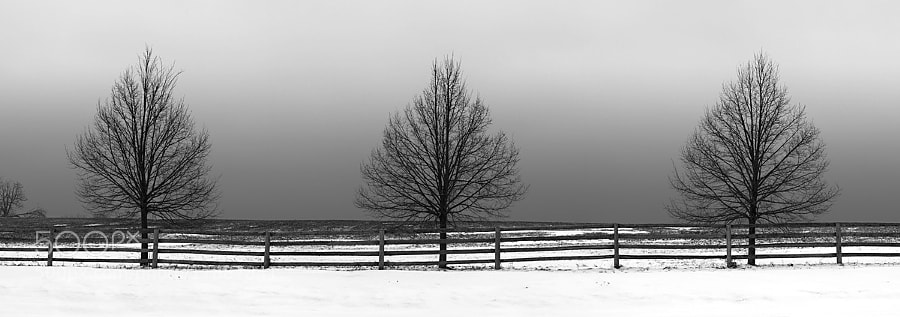 Three trees posing for a winter fine art photo.