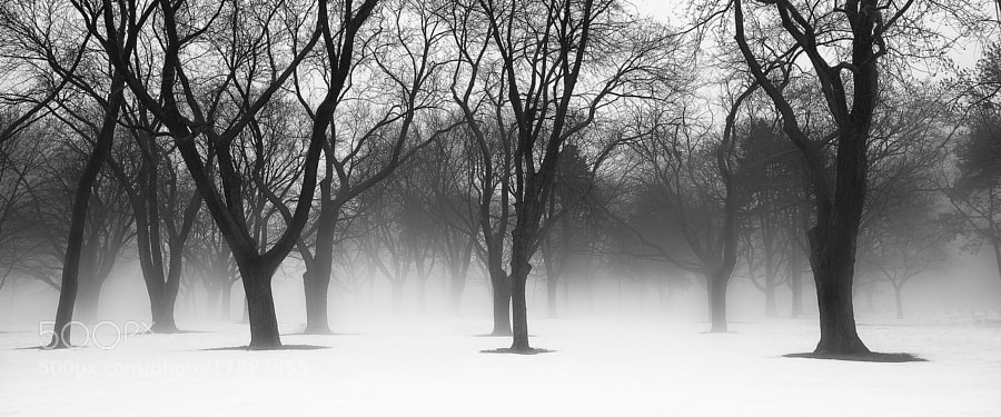 Foggy winter landscape.