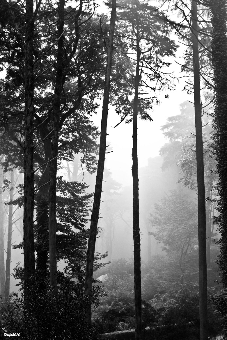 Photograph Foggy In The Forest by Jose Luis Gea Arques on 500px