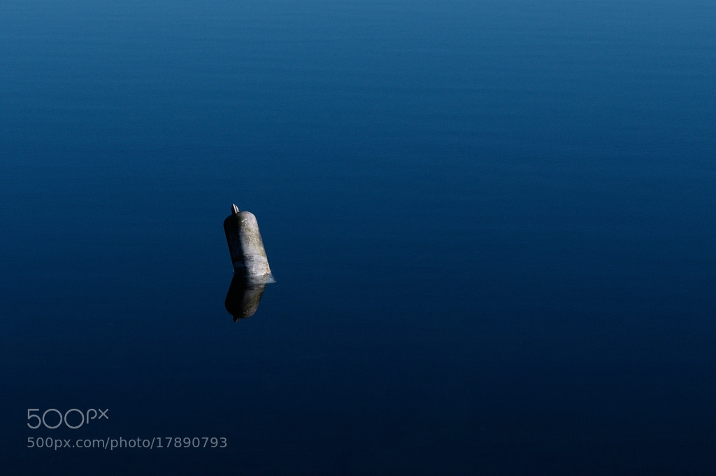 Photograph Just above the surface... by Almqvist Photo on 500px