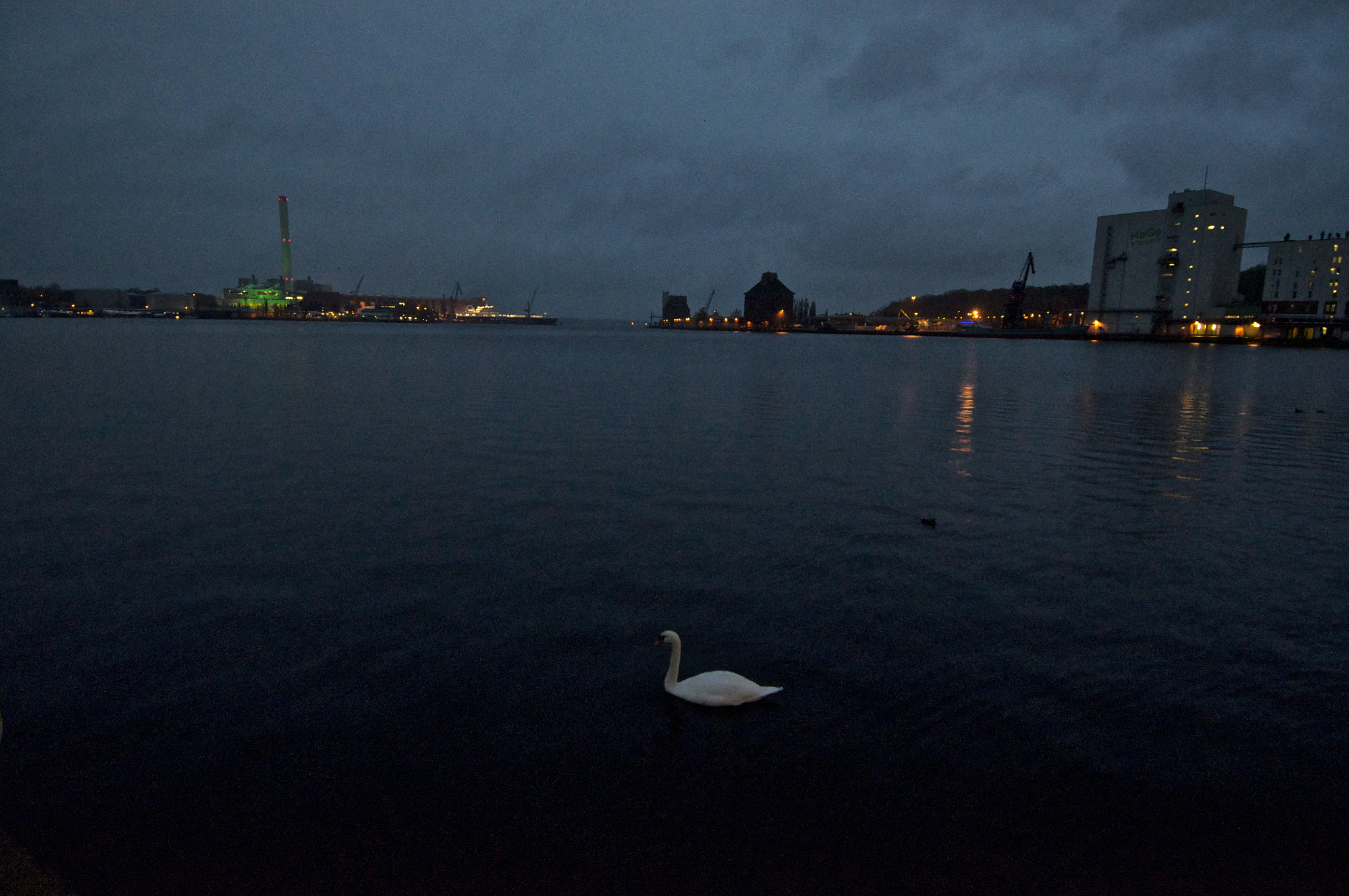 Photograph Swan at the port. by ∆∂¡ Dronadev on 500px