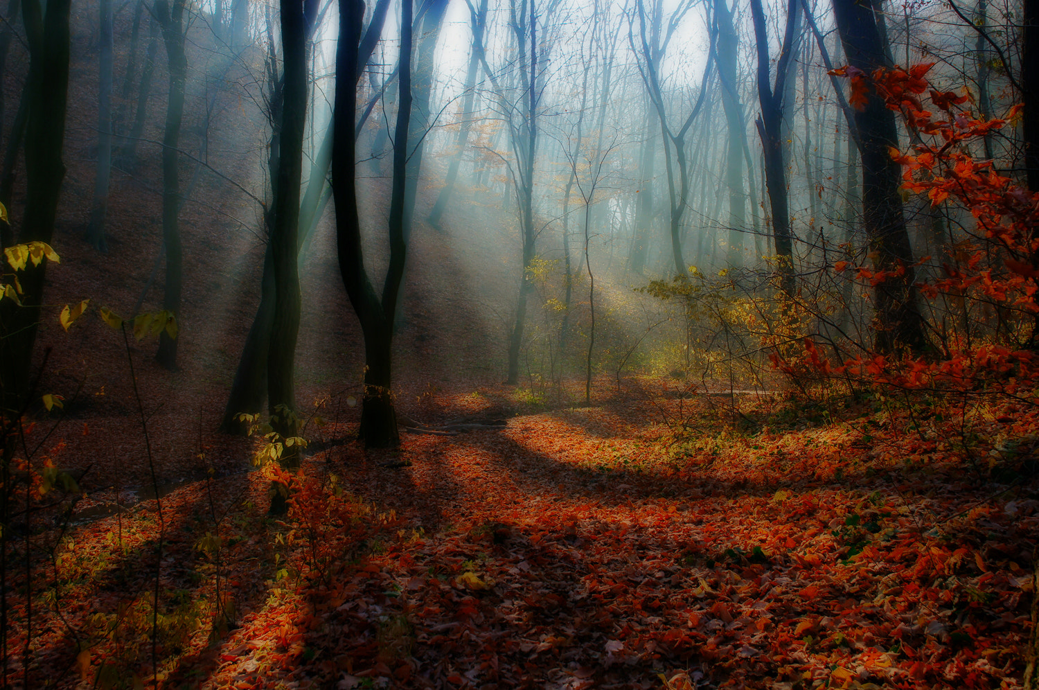 Photograph woody trail by Andy 58 on 500px