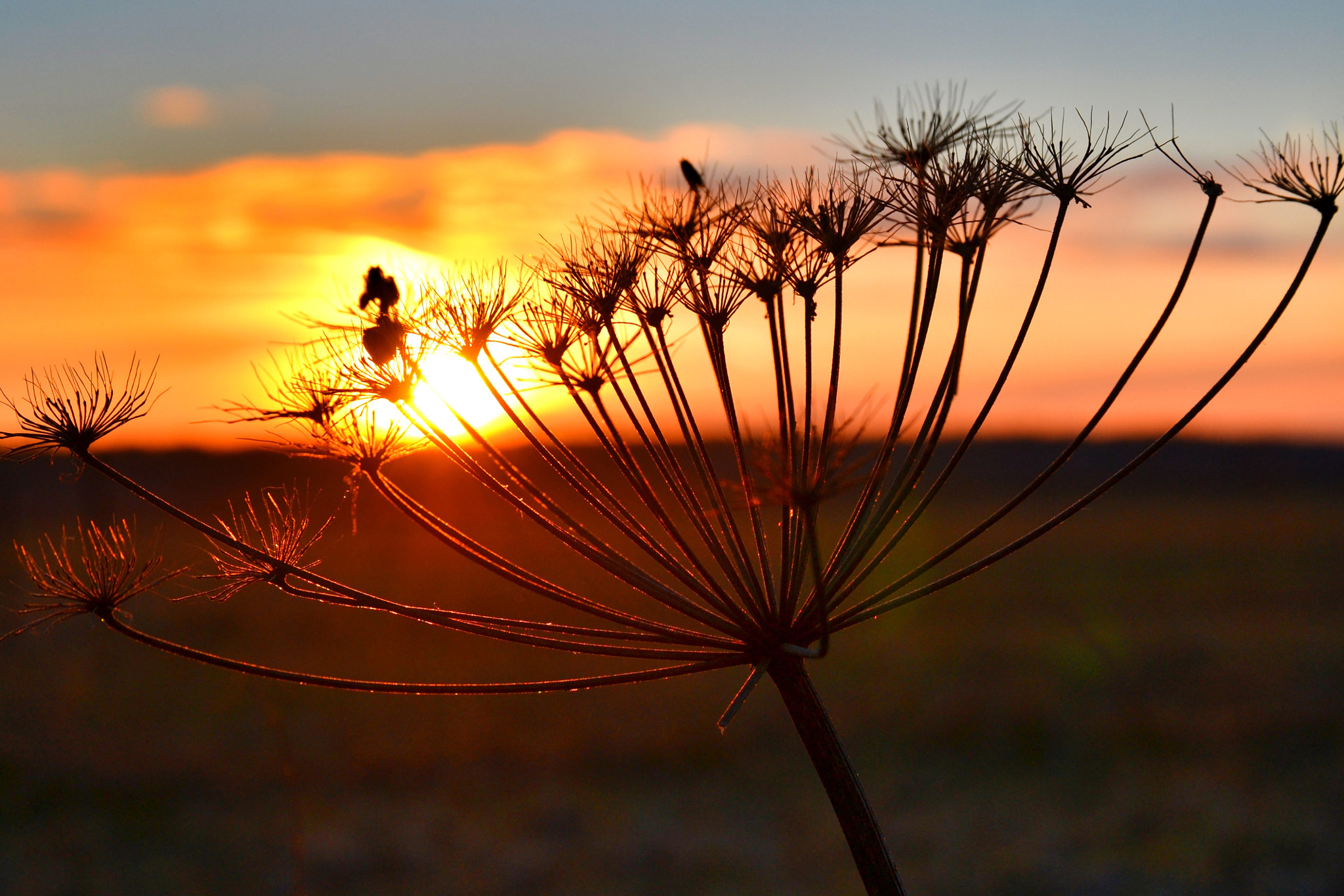 Photograph The sun November. by F plusO on 500px