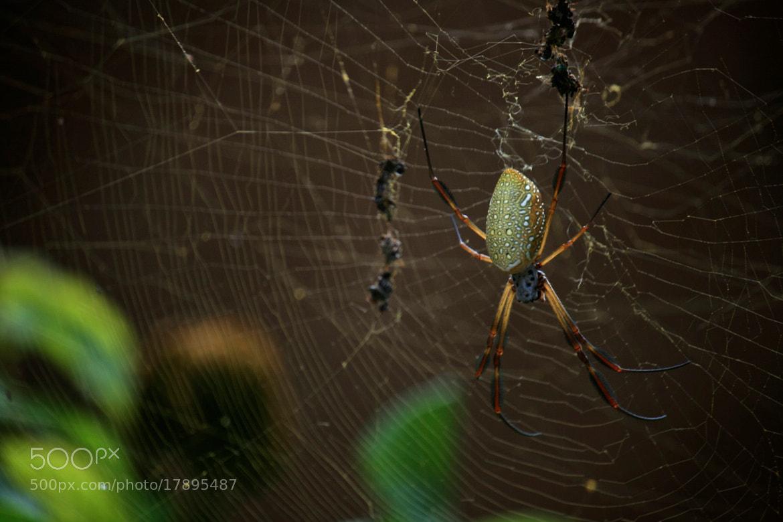 Photograph Araña / Spider by Andrés Aquino on 500px