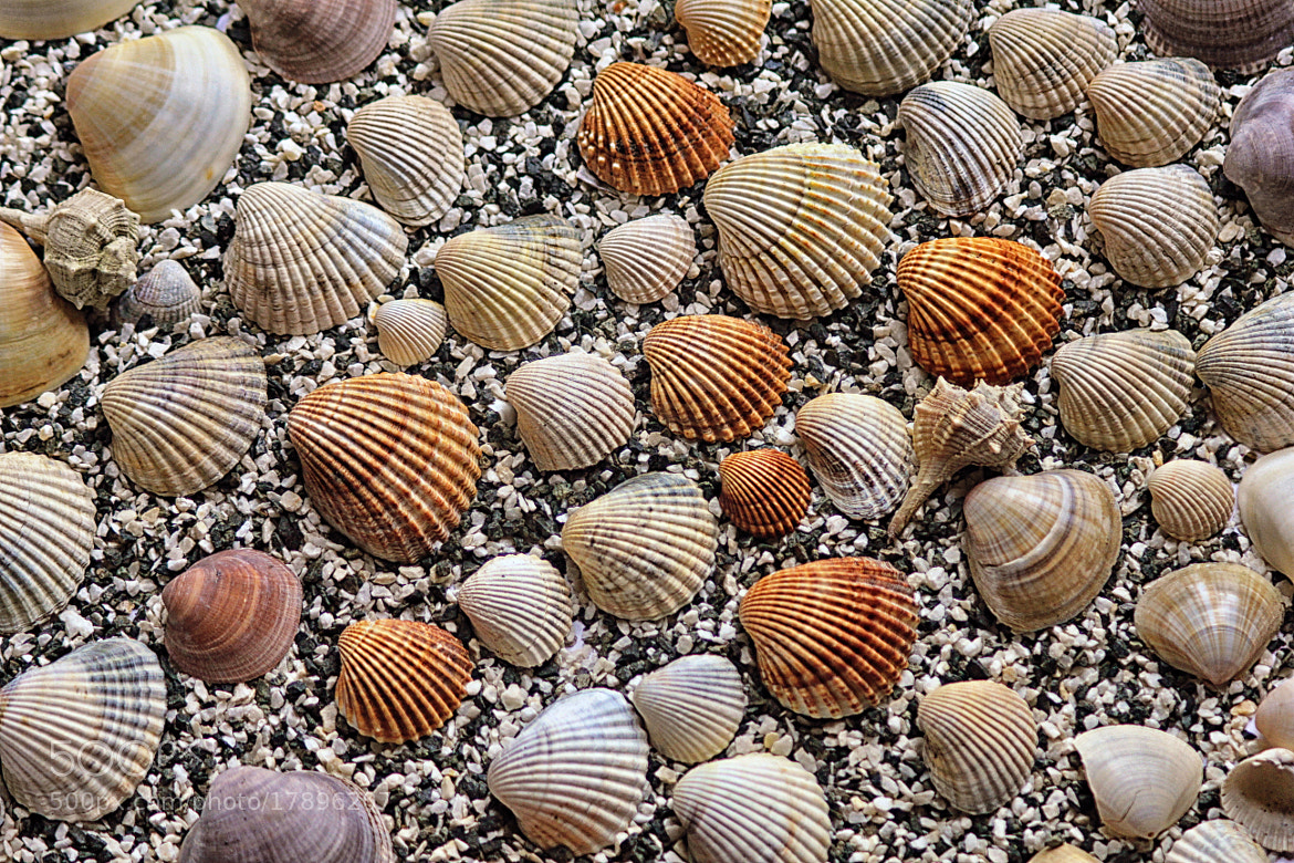 Photograph Shells by Vendenis   on 500px