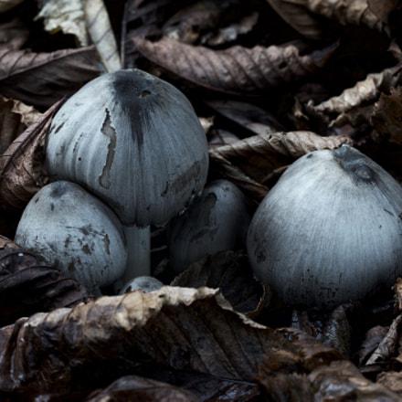 Mushroom still live.